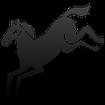 نکاتی درکنار اسب