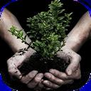 روش های کاشت گیاهان