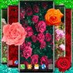 Red Rose Live Wallpaper 🌹 Romantic Wallpapers