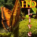 پس زمینه زنده پروانه HD Butterfly