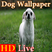 پس زمینه زنده سگ HD Dog