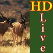 پس زمینه زنده حیات وحش HD Wildlife