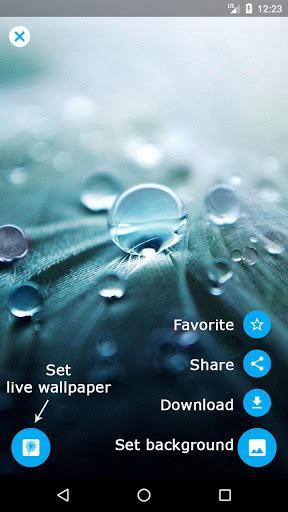 Dandelion Live Wallpaper - Image screenshot of android app