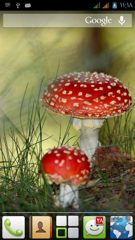 طبیعت - عکس برنامه موبایلی اندروید