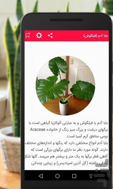 گیاهان گلدانی - عکس برنامه موبایلی اندروید