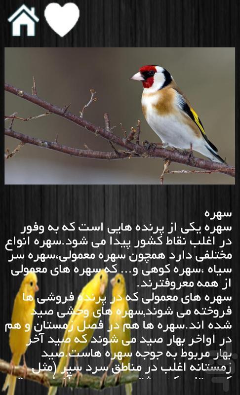 پرورش پرندگان زینتی - عکس برنامه موبایلی اندروید