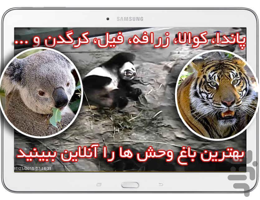 پخش زنده باغ وحش و جنگل آفریقا - عکس برنامه موبایلی اندروید