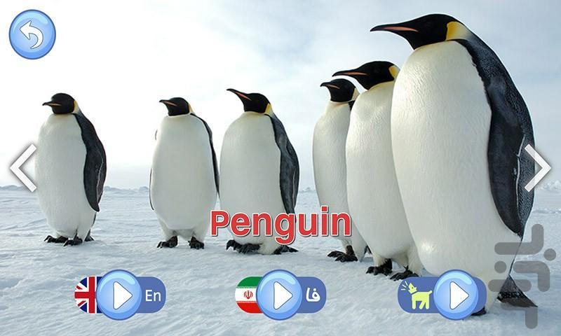 صدای حیوانات ، سرگرمی آموزش کودکان - عکس بازی موبایلی اندروید