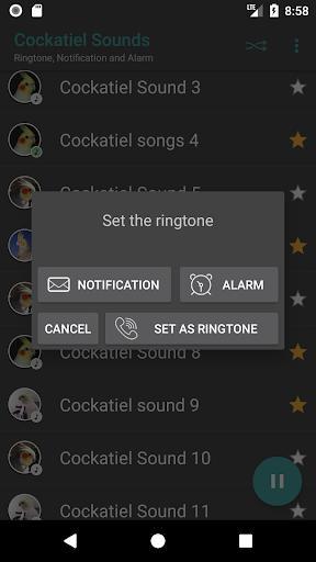 Appp.io - Cockatiel Sounds - عکس برنامه موبایلی اندروید