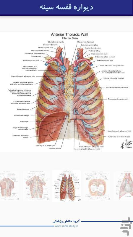 اطللس آناتومی نتر - تنه ارگان داخلی - عکس برنامه موبایلی اندروید