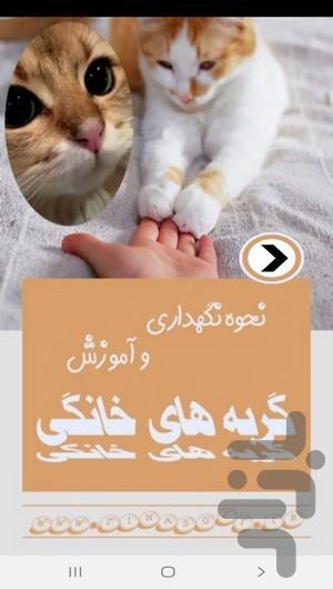 نحوه نگهداری و آموزش گربه های خانگی - عکس برنامه موبایلی اندروید