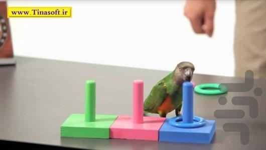 چگونه به طوطی مان آموزش دهیم؟ - عکس برنامه موبایلی اندروید